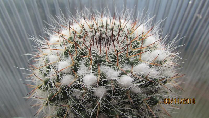 Cactus under carbonate 4 Img_6919