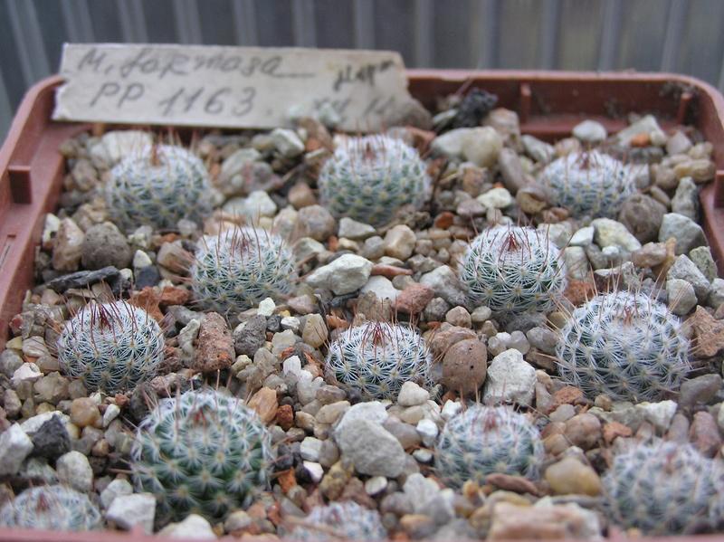 Cactus under carbonate 5 M_form17