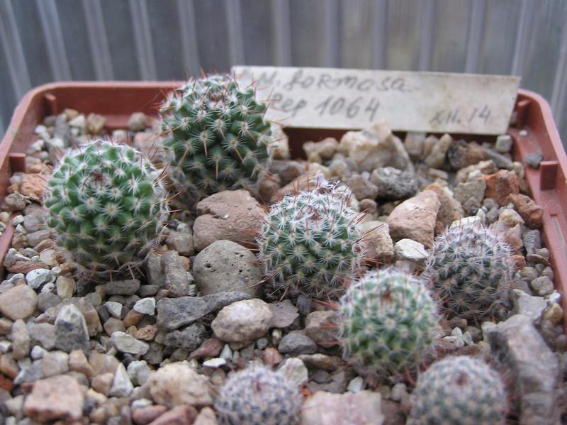 Cactus under carbonate 5 M_form19