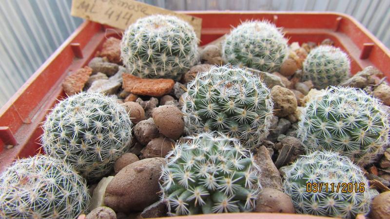 Cactus under carbonate 5 M_form20