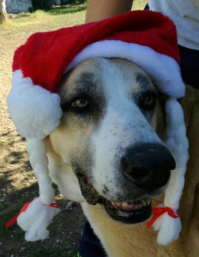 Canis Thor(Gedeeltelijke adoptie) 15055610
