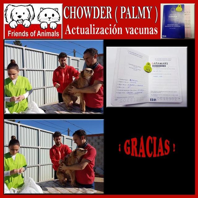 AU - Palmy 15253310