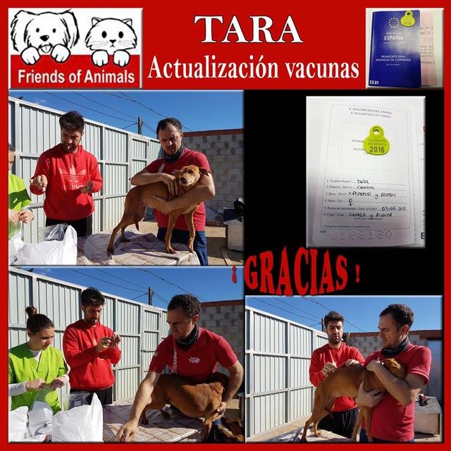 AU Tara 15253610
