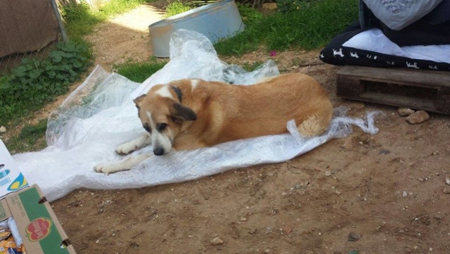 Canis Thor(Gedeeltelijke adoptie) 15326111