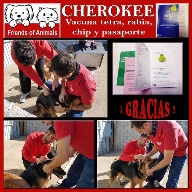 AU - Cherokee 15326410