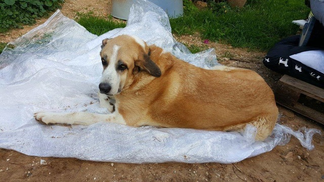 Canis Thor(Gedeeltelijke adoptie) 15369911