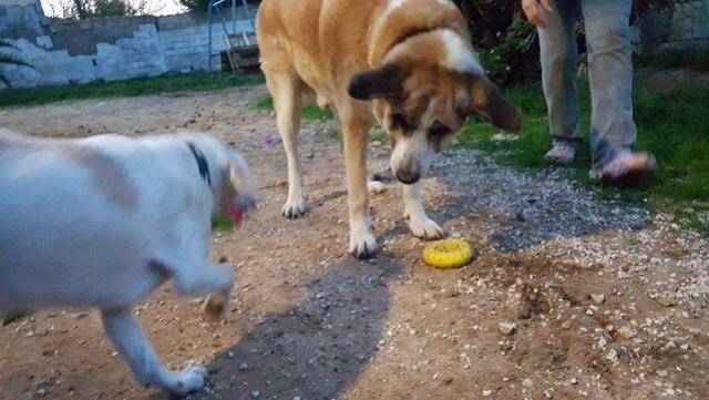 Canis Thor(Gedeeltelijke adoptie) 15418510