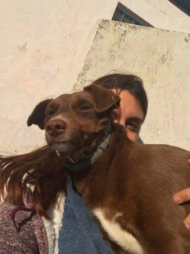 Canis - Golfo 15727210