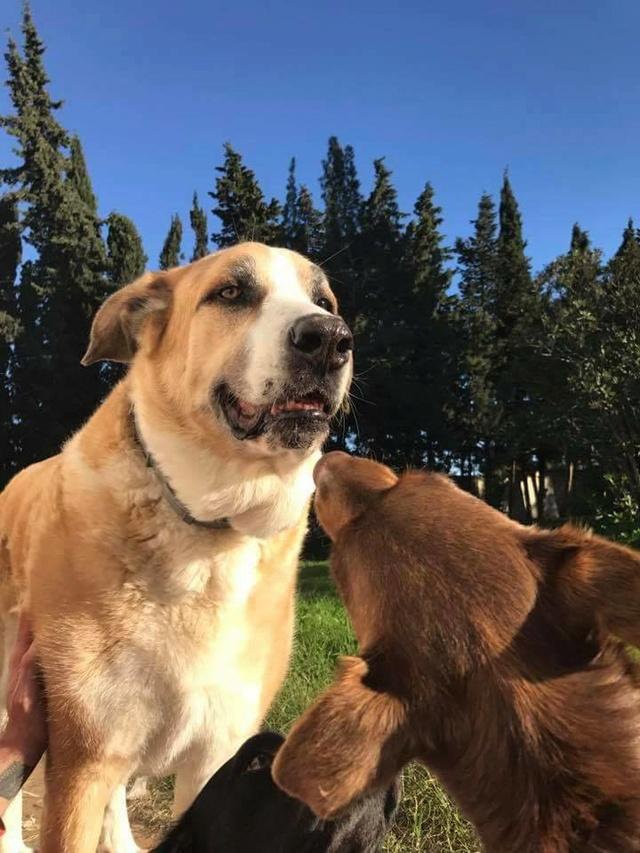 Canis Thor(Gedeeltelijke adoptie) 15747410