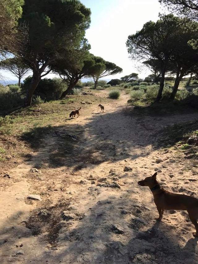 Canis - Golfo 15977410
