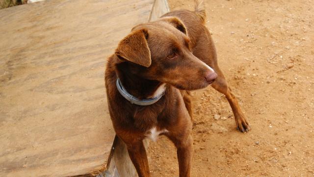 Canis - Golfo Dsc01917