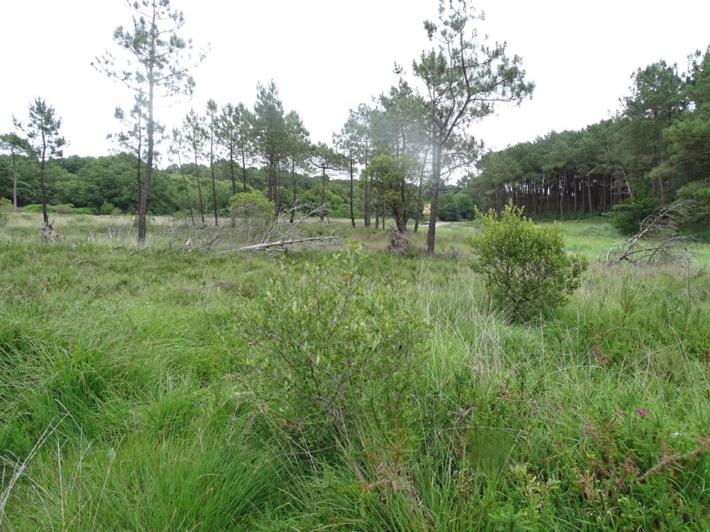 Nouveau site pour Rhagades pruni Dsc00611