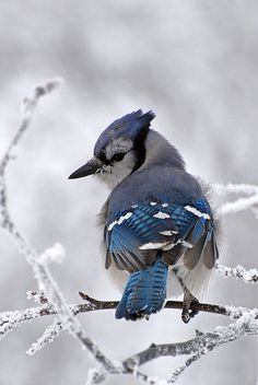 Pensez aux oiseaux l'hiver arrive. B2778310