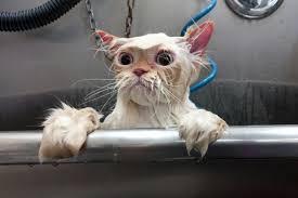 Franche partie de rigolade avec nos amis les chats. Images10