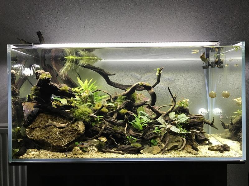 Aquarium 180L aquascapé - Page 2 Img_0612