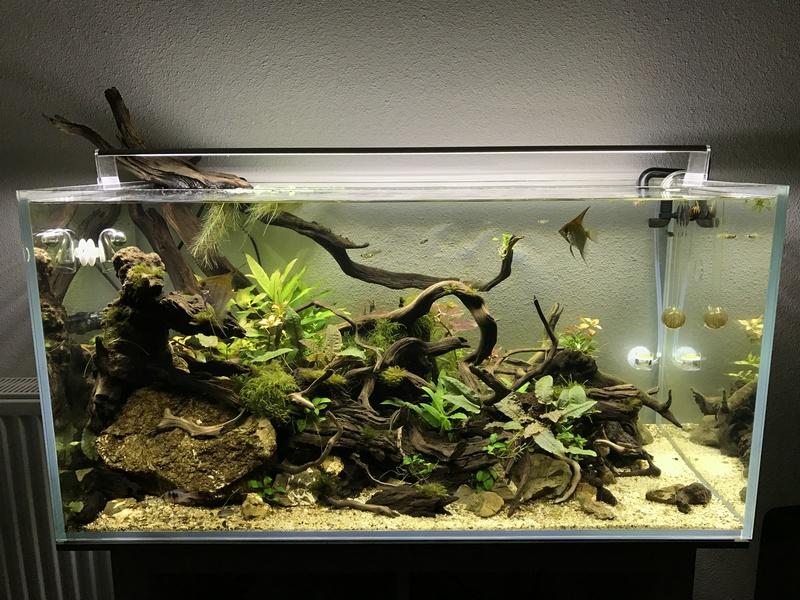 Aquarium 180L aquascapé - Page 2 Img_0616