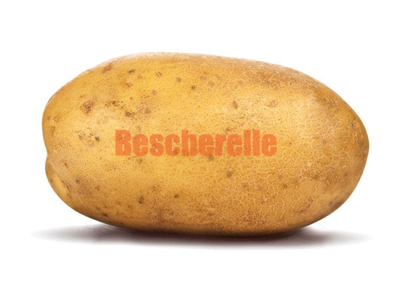Description de Pomme de Terre Potato10