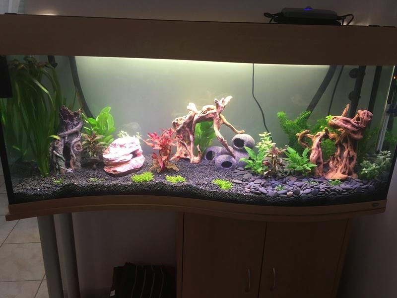 Aquarium de ilouange Img_0214