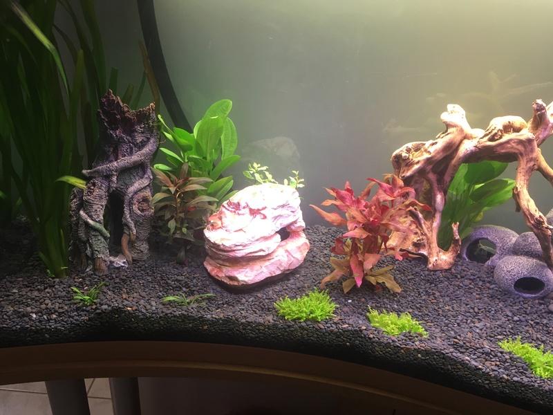 Aquarium de ilouange Img_0215