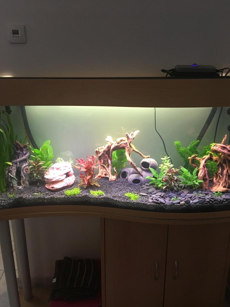 Aquarium de ilouange Img_0216