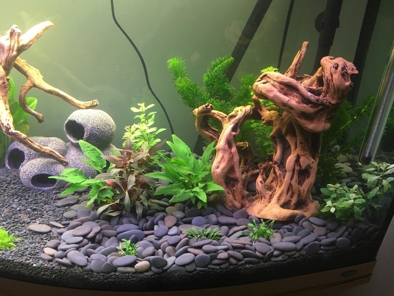 Aquarium de ilouange Img_0217
