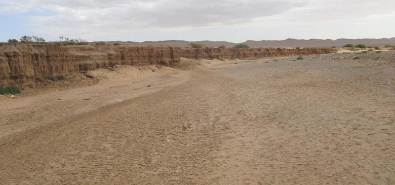 les gastéropodes du quaternaire de l'oued Metlili Laghouat. Vue_ge10