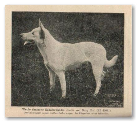 Белая овчарка в Германии с 1879 по 1925 год 3270911