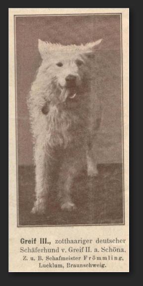 Белая овчарка в Германии с 1879 по 1925 год 3271111