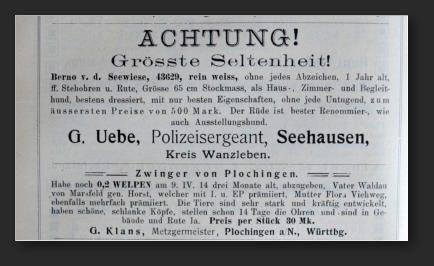 Белая овчарка в Германии с 1879 по 1925 год 3271211