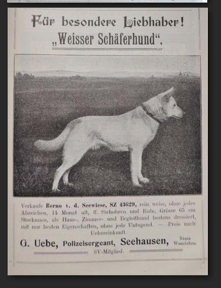 Белая овчарка в Германии с 1879 по 1925 год 3271311