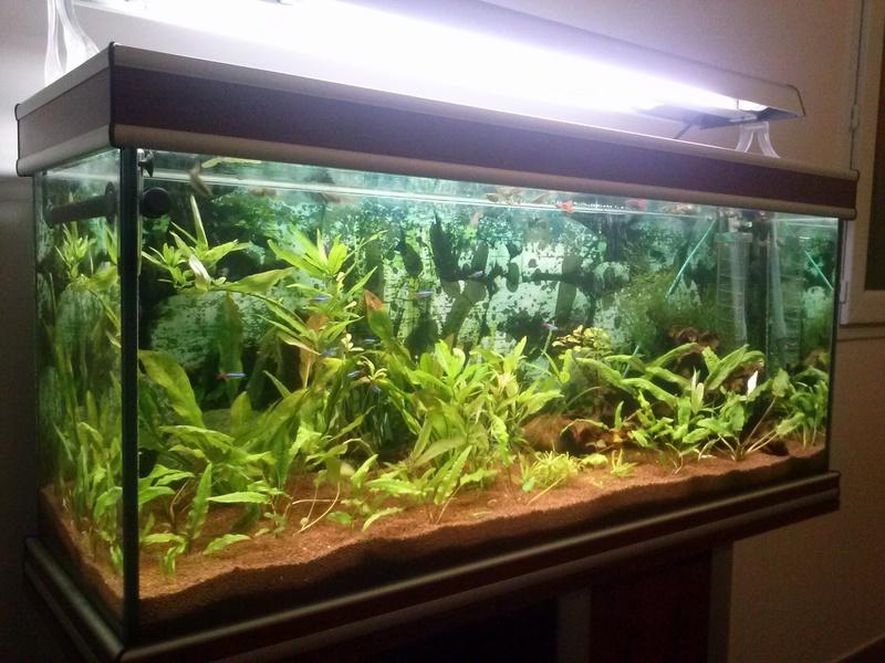 Reprise de l'aquariophilie - Démarrage d'un 180 litres Cam00811