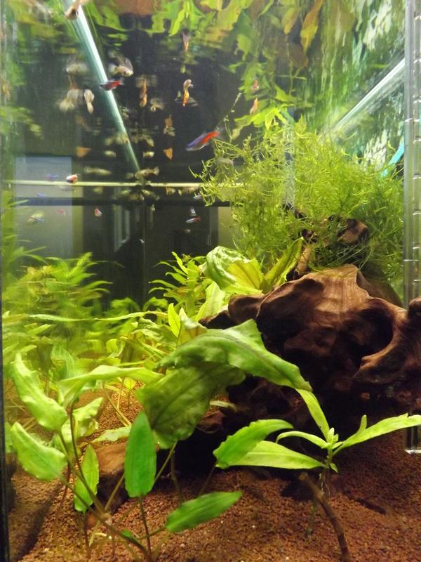 Reprise de l'aquariophilie - Démarrage d'un 180 litres Dscf5211