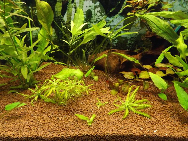 Reprise de l'aquariophilie - Démarrage d'un 180 litres Dscf5215