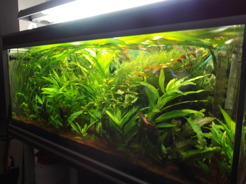 Reprise de l'aquariophilie - Démarrage d'un 180 litres Dscf5219