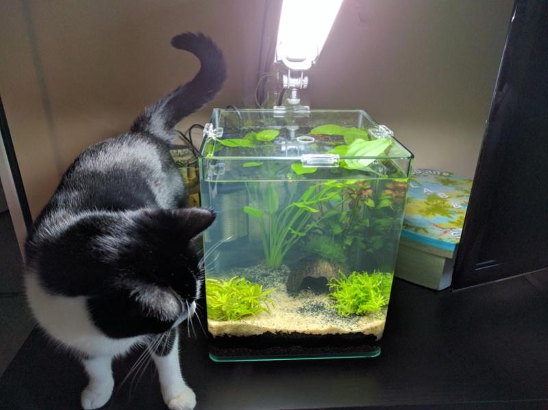 Questions suite à la mise en eau de l'aquarium Img_2010