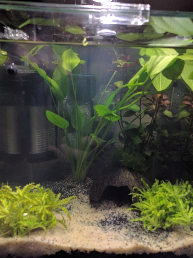Questions suite à la mise en eau de l'aquarium Img_2011