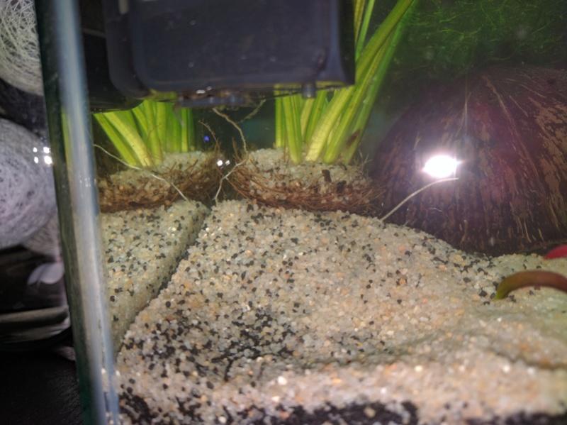 Questions suite à la mise en eau de l'aquarium Img_2012