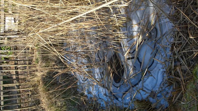 L'ail et l'échalote poussent au Forestois Wp_20112