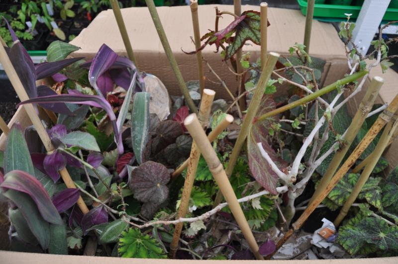 Vivaio Un Quadrato di Giardino  Novemb32