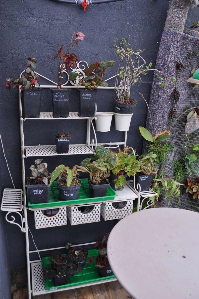 Vivaio Un Quadrato di Giardino  Novemb33