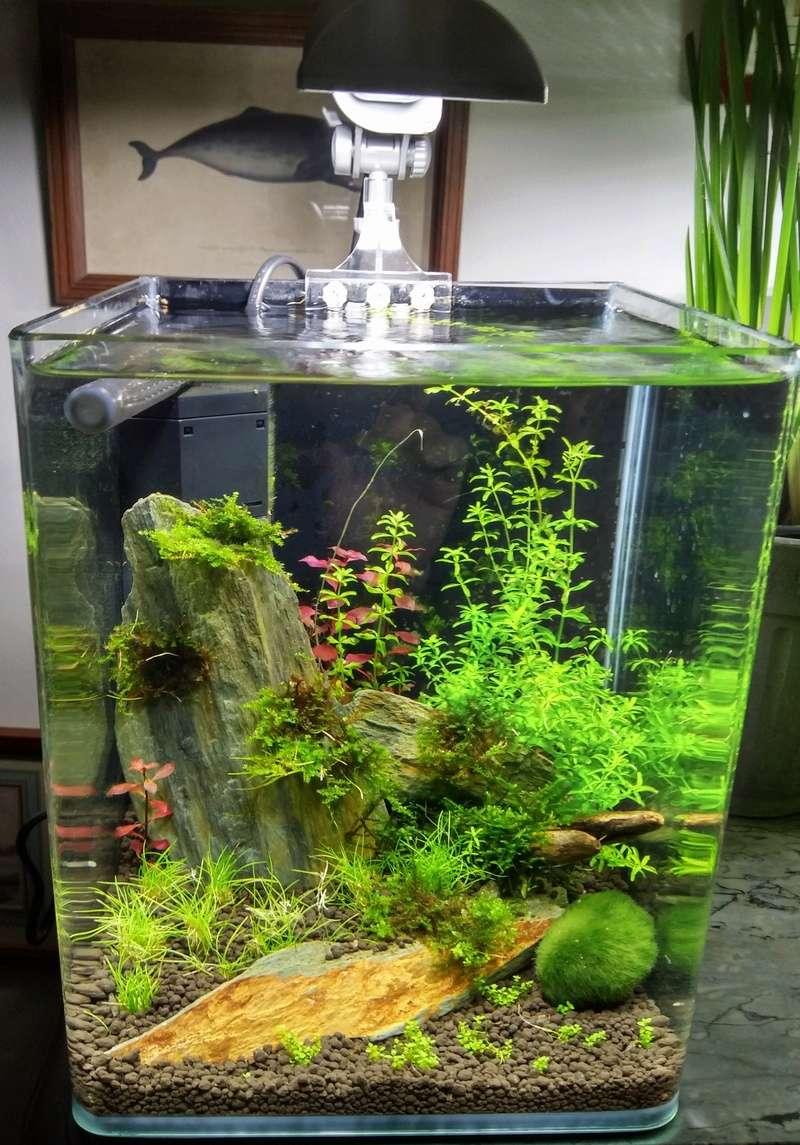 Je vais vous présenter mon aquarium DENNERLE NanoCube 10 L. 20161011