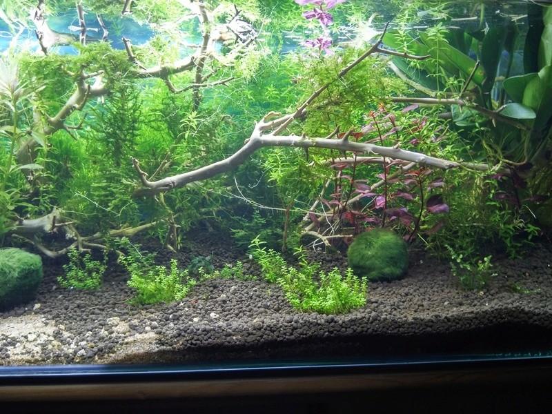 aide pour le choix des plantes !!! 20161015