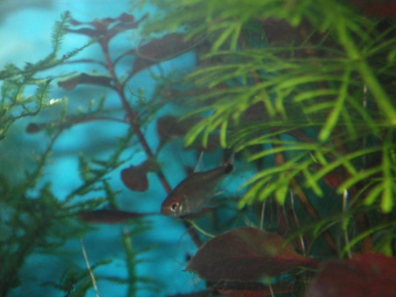 Je vais vous présenter mon aquarium de 96 l. Imgp0014