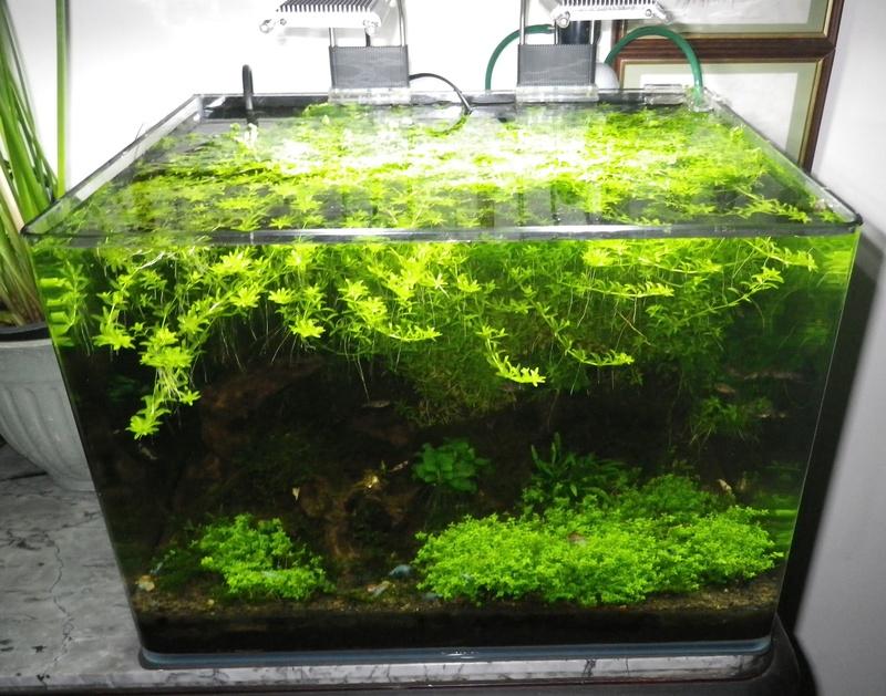 Je vais vous présenter mon aquarium Scaper's Tank 35l LED. Imgp0016