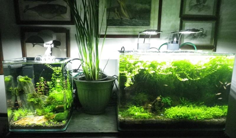 Je vais vous présenter mon aquarium Scaper's Tank 35l LED. Imgp0018