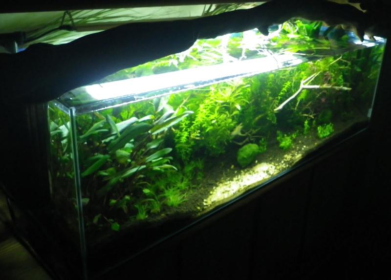 Je vais vous présenter mon aquarium de 56 l. Imgp0019