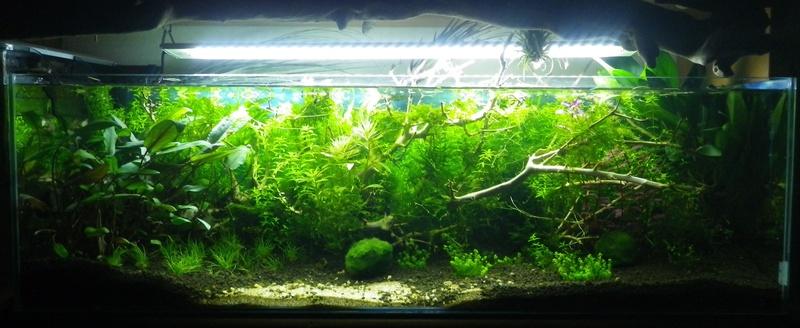 Montrez vos Aquariums Imgp0020