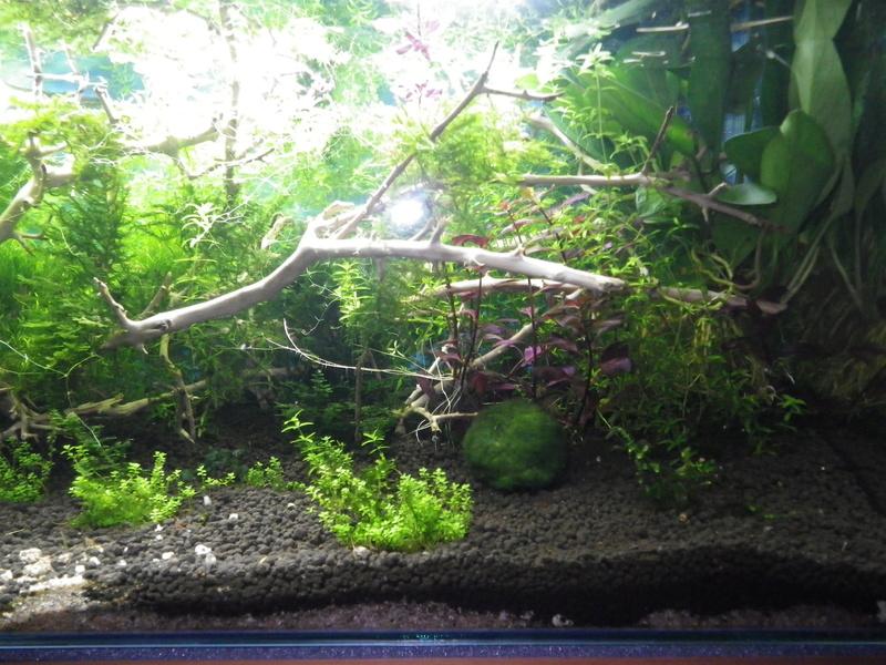 Je vais vous présenter mon aquarium de 56 l. Imgp0022