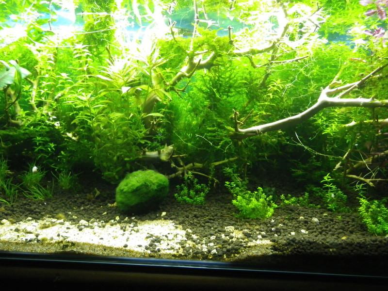 Je vais vous présenter mon aquarium de 56 l. Imgp0025
