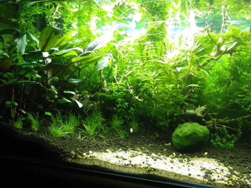 Je vais vous présenter mon aquarium de 56 l. Imgp0026